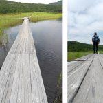 裏磐梯の雄国沼湿原を歩く